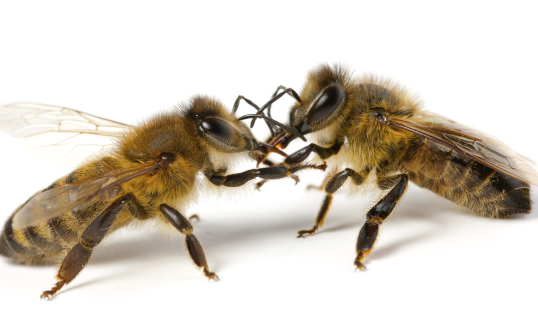 Ever Wonder Why Your Bees Died? by Denzil St. Clair