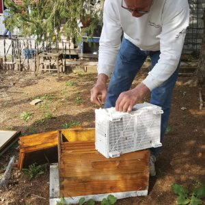 Package Bee installation