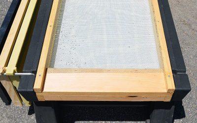 Honey Bee Loss 2019