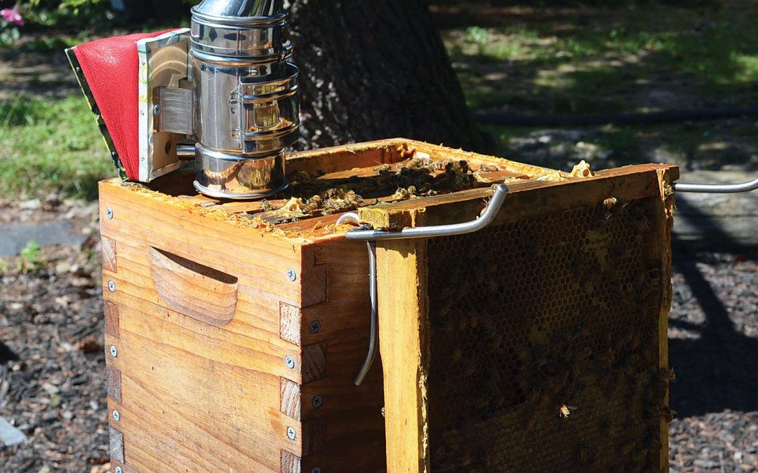 What is a Successful Beekeeper?