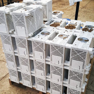 Package Bees For Sale