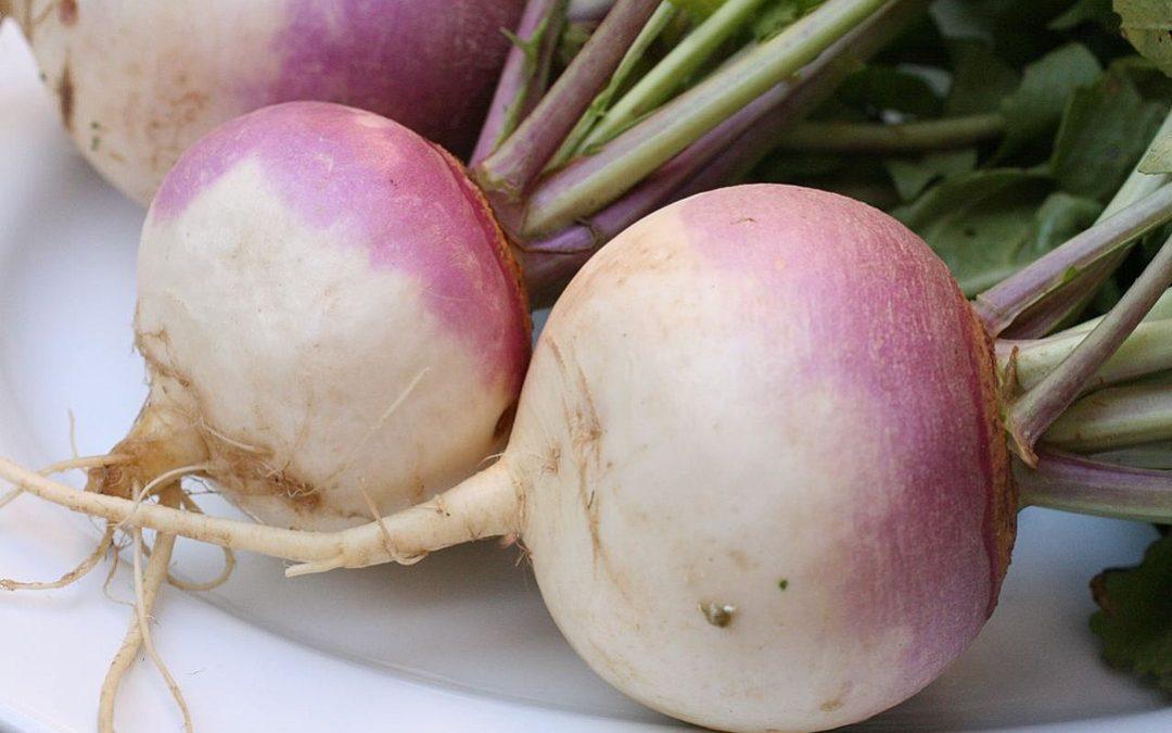 Turnips, Turnip sellers, Turnip buyers, and Turnip Truck Drivers