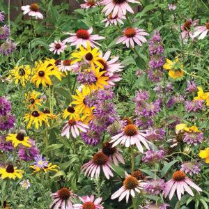 Bee Garden Seeds
