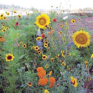 Xerces Pollinator Mix