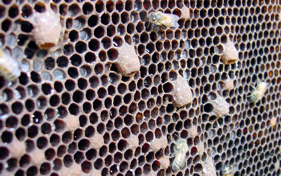 Let the honey bees decide, they always make the best decision!